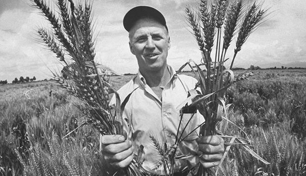 Borlaug Honored
