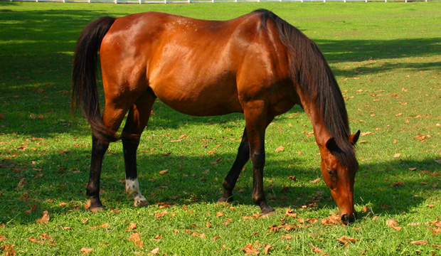CBS Philly: Southeastern PA. Equine Industry Has A $670 Million Economic Impact, Study Says