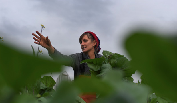 WaPo: A Growing Number of Young Americans are Leaving Desk Jobs to Farm